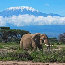 mount-kilimanjaro-1.jpg