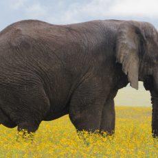 3-Days-wildlife-safaris.jpg